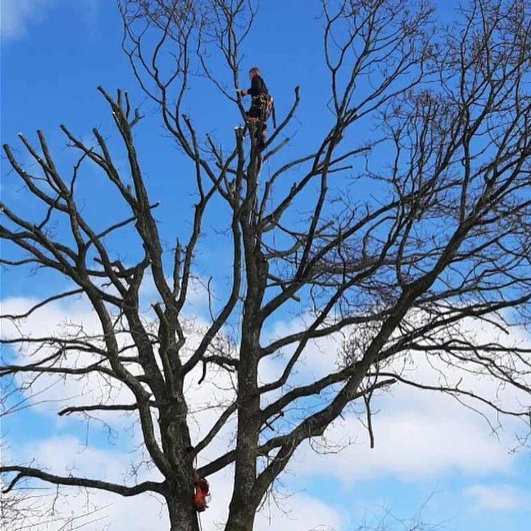 Styning af træ
