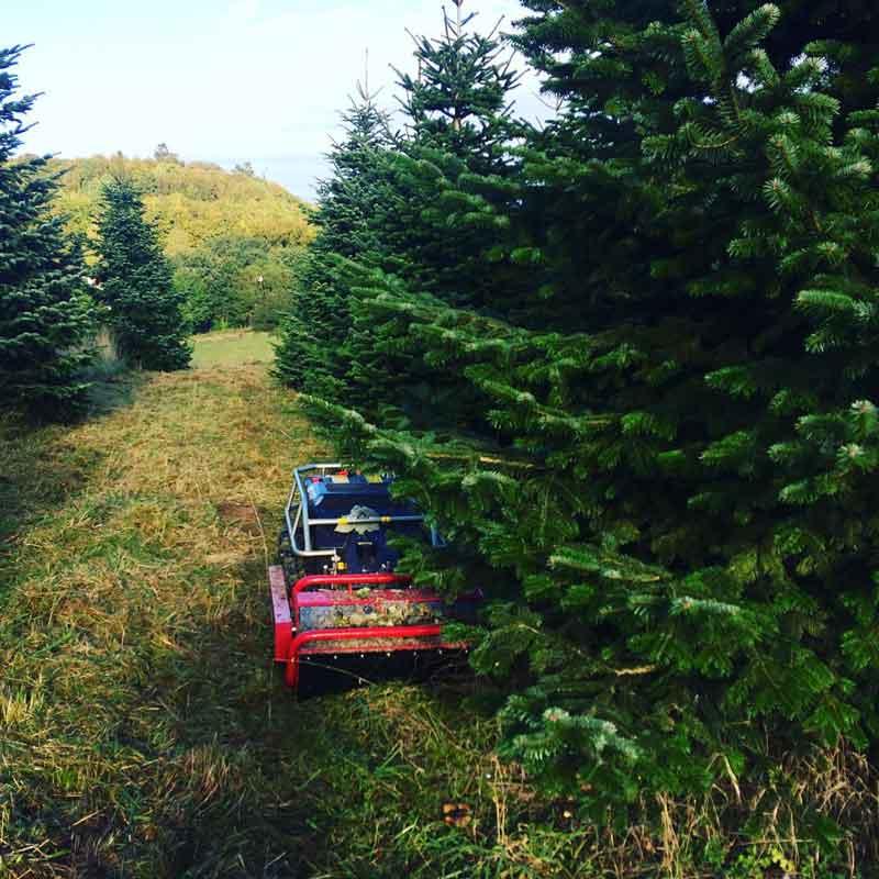 græsklipning juletræsplantage